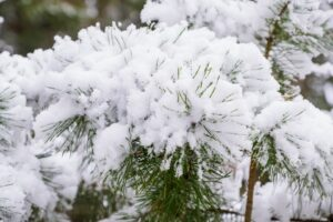 Can You Spray Fake Snow On An Artificial Tree